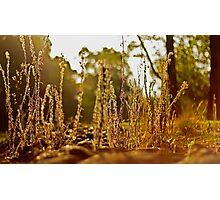 A grassy sunset 2 Photographic Print
