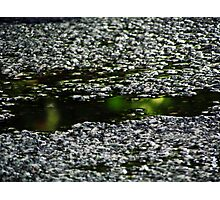 Jeweled Puddle Photographic Print