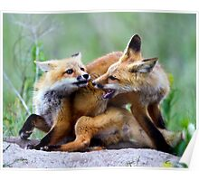 Fox kits, exercise in dominance Poster