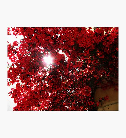 Sunny Red Flowers Photographic Print