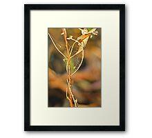 A grassy sunset 3 Framed Print