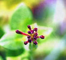 honeysuckle ready to bloom... ♥ by Gregoria  Gregoriou Crowe