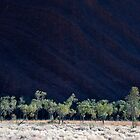 Trees of Uluru by Sheaney