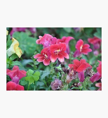 Lovely Garden Flowers In Bloom Photographic Print