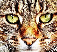 Tiger Cat by Wonkstar