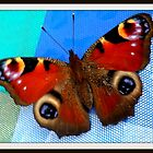 Peacock butterfly  by The Creative Minds