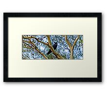 Crowing loudly Framed Print