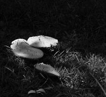 Mushrooms by Kimberly  Saulsberry