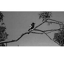 Nothing to crow about in b/w Photographic Print