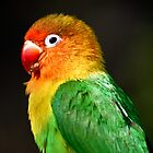 Rainbow Parrot by pcfyi