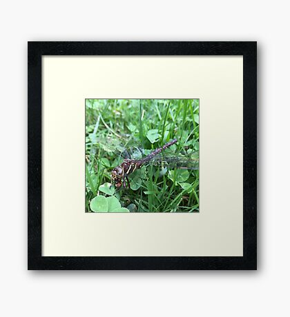 Cannibal Dragonfly Framed Print