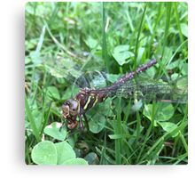 Cannibal Dragonfly Canvas Print