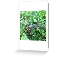 Cannibal Dragonfly Greeting Card