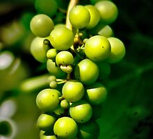 Fruit of the Vine by missmoneypenny