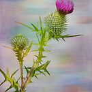 Spear Thistle by M.S. Photography/Art