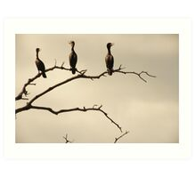 The Snappy Conversation of Cormorants Art Print