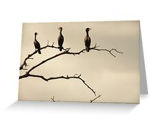 The Snappy Conversation of Cormorants Greeting Card