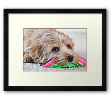 Dogs and Their Toys Framed Print
