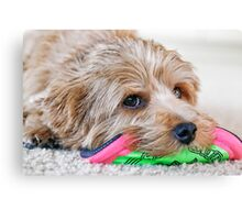 Dogs and Their Toys Canvas Print