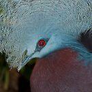 Blue Bird by Vac1