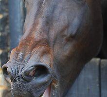 'Ya Horse-Faced Goon' by Stephen J  Dowdell