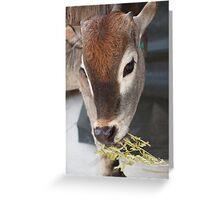 Zazu Greeting Card