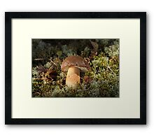 Cepe - Edible Mushroom Framed Print