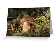 Cepe - Edible Mushroom Greeting Card