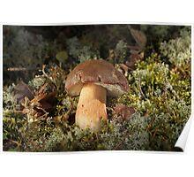 Cepe - Edible Mushroom Poster