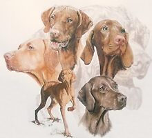 Hungarian Vizsla by BarbBarcikKeith