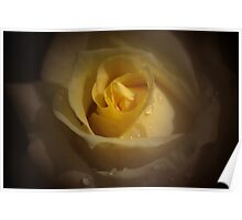 Yellow English Rose Poster
