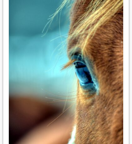 Horse Eye Sticker
