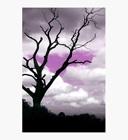 Purple sky tree Abstract Photographic Print