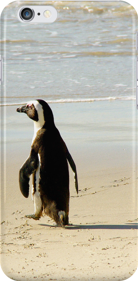 South African Penguin on Boulders Beach  by traveling9to5