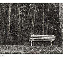 Bench by a Woods by Richard Bean