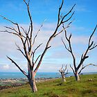 Three dead trees by Danny  Waters