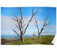 Three dead trees Poster