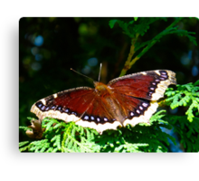 My nemesis with wings Canvas Print