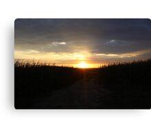 Cornfield Sunset Canvas Print
