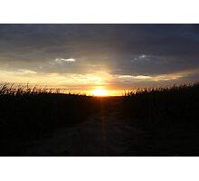Cornfield Sunset Photographic Print