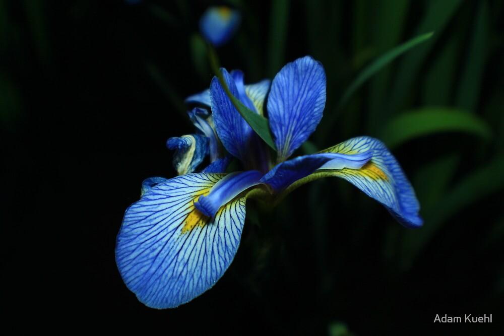 My Wife's favorite flower by Adam Kuehl