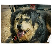 """""""Goodess"""" the Shaggy Dog Poster"""
