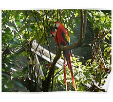 Colorful Birds, Aviary, Queens Zoo, Flushing Meadow Park, Queens, New York Poster