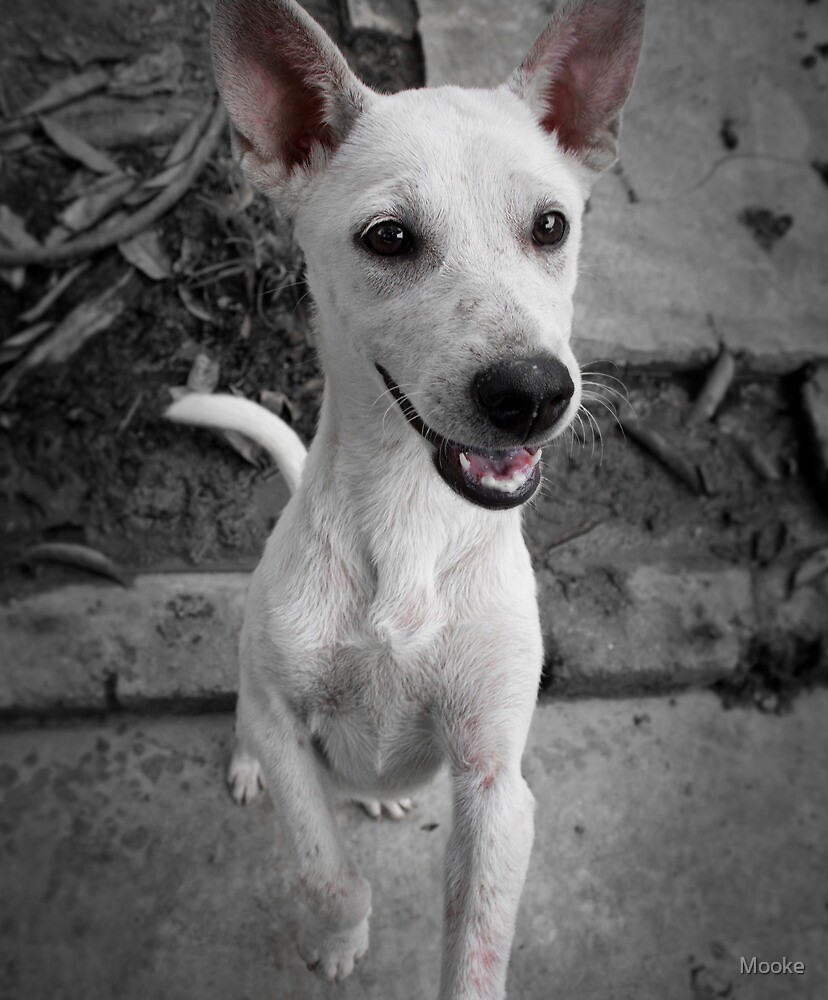 Furry Friends Farm rescued puppy by Mooke