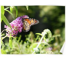 Butterfly and Flowers, Queens Zoo, Flushing Meadow Park, Queens, New York   Poster