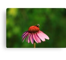 Bumble me Daisy2 Canvas Print