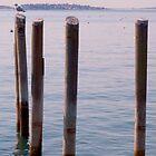 Gull at the Pier by Matthew Barrett