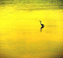 crane.. by JOSEPHMAZZUCCO