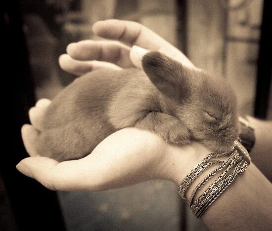 Baby Bunny by Mooke