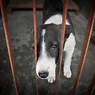 Kathmandu Animal Treatment Centre puppy by Mooke